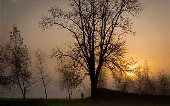 Fondos de pantalla Árboles, puesta de sol, niño, perro, niebla, silueta
