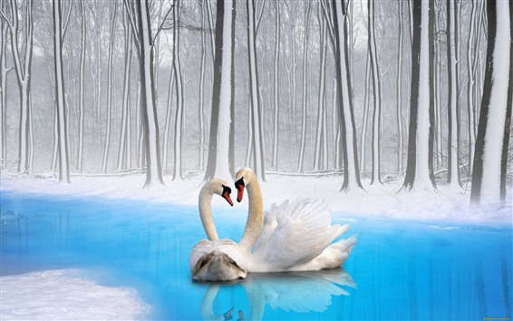 壁紙 2羽の白鳥、カップル、冬、雪、木、池