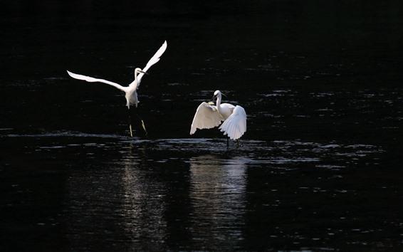 Papéis de Parede Garça branca, peixe de caça, lago