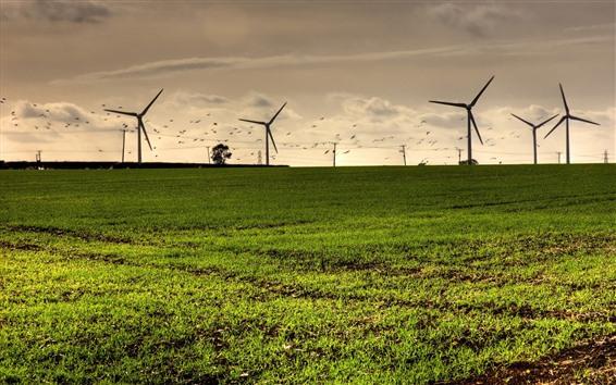 Wallpaper Windmills, grass, birds