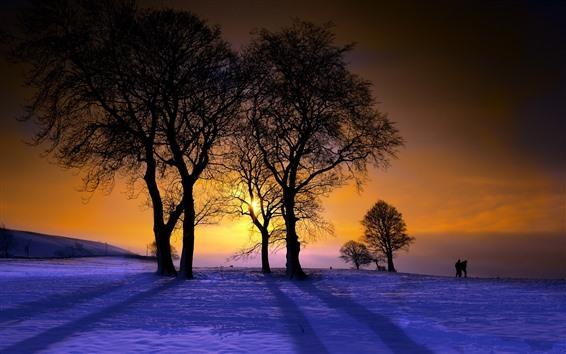 壁紙 冬、木、夕日、雪、人々
