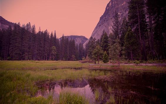 Обои Йосемитский национальный парк, лес, сумерки, туман