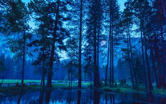 Fond d'écran Yosemite, crépuscule, forêt, arbres, étang, réflexion de l'eau, USA