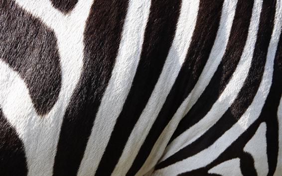 Wallpaper Zebra, black and white lines