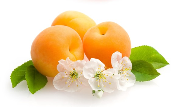 Wallpaper Apricots, flowers, white background