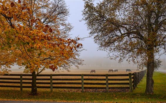 Wallpaper Autumn, horses, fence, trees, fog, morning