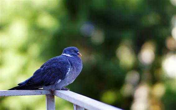 Обои Голубые перья голубя