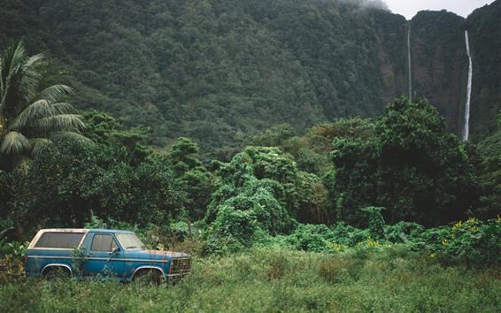 壁紙 車、木、崖、滝