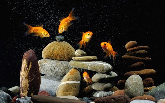 Papéis de Parede Peixe dourado, pedras, bolhas de água