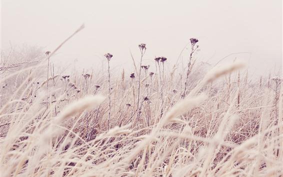 Wallpaper Grass, wildflowers