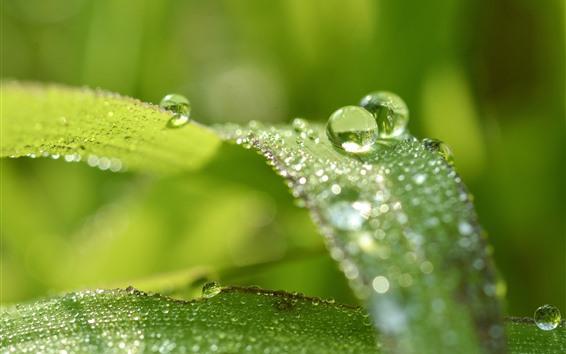 Обои Зеленая трава, листья, капли воды, туманный фон