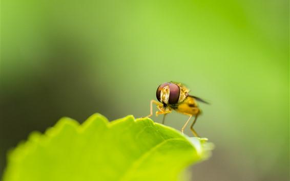 배경 화면 녹색 잎, 곤충, 꿀벌