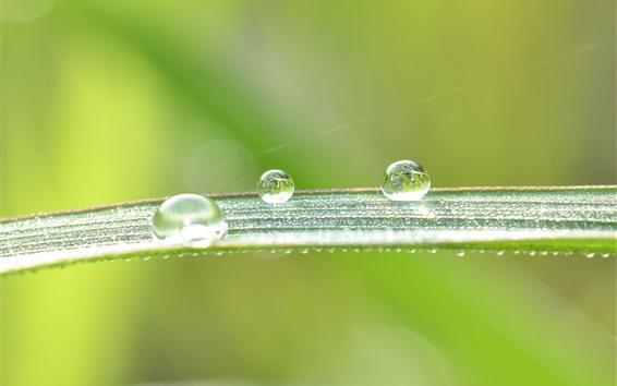 Wallpaper Green leaf, many water droplets