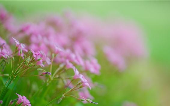 Papéis de Parede Pequenas flores cor de rosa, fundo nebuloso, primavera