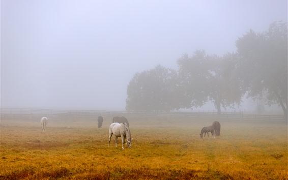 Обои Утро, туман, несколько лошадей, трава