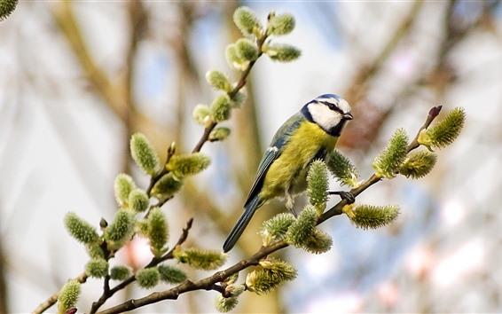 Papéis de Parede Um pássaro, galhos, primavera, botões