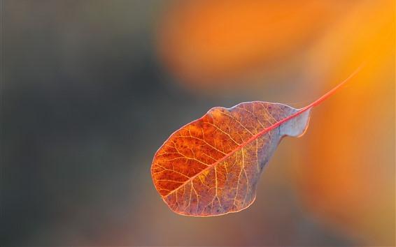 Обои Один лист, туманный, осень