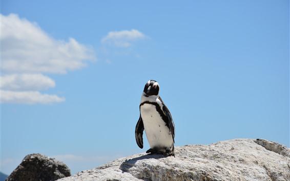 Papéis de Parede Um pinguim, pedras