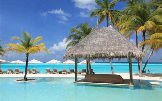 Обои Пальмы, бассейн, солярий, тропический, курорт