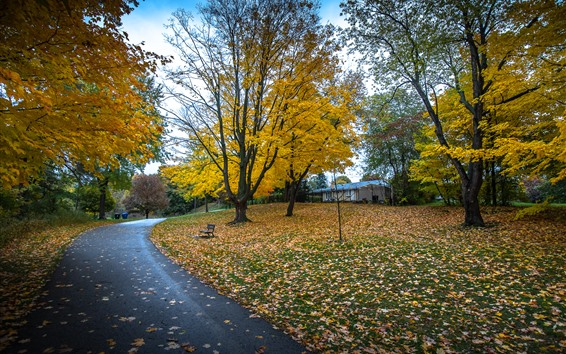 Wallpaper Park, trees, autumn, road
