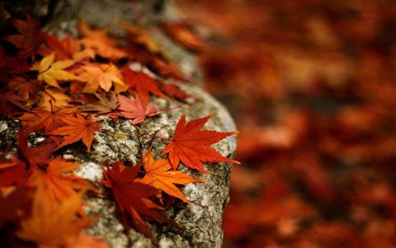 Обои Камень, красные кленовые листья, осень
