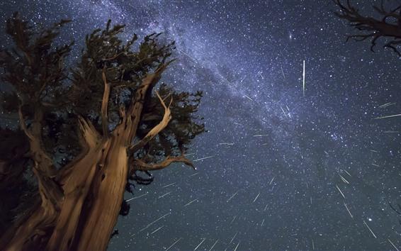 Fond d'écran Arbre, nuit, étoilé, ciel