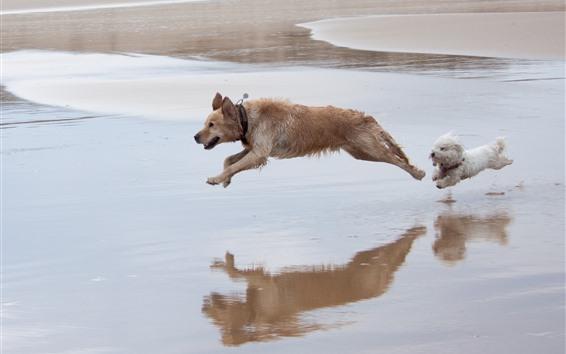 Wallpaper Two dogs running, beach, water