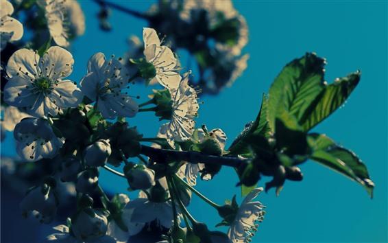 Wallpaper White flowers, twigs, backlight