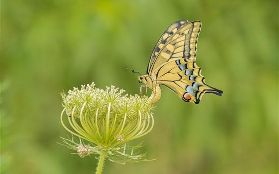 Papéis de Parede Borboleta amarela, asas, flores
