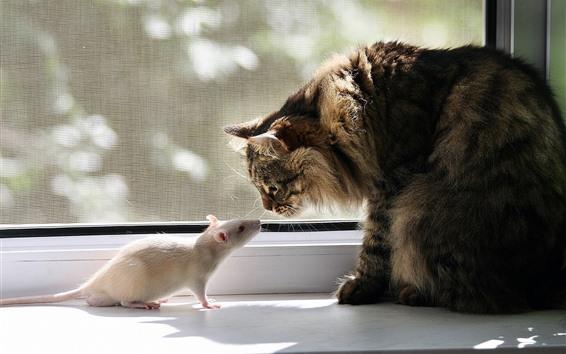 Обои Кошка и белая мышь, лицом к лицу, окно
