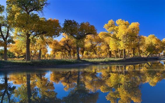 Wallpaper Golden autumn, trees, lake, water reflection