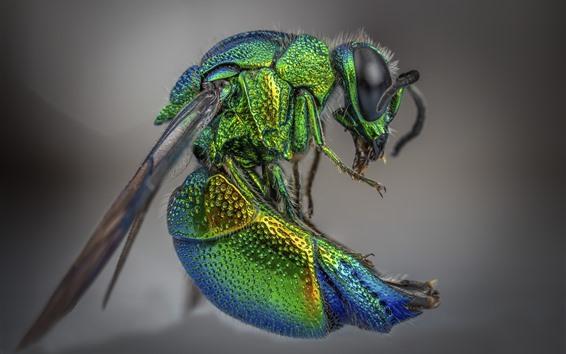 배경 화면 곤충, 집 파리, 녹색, 매크로 사진