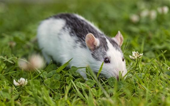 Wallpaper Mouse, grass