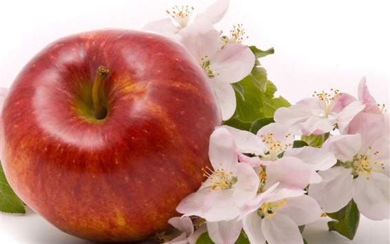 Wallpaper One red apple and apple flowers