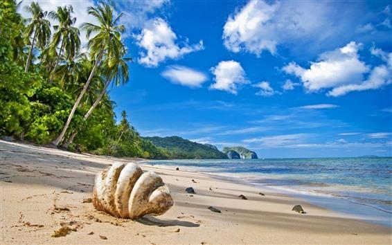 桌布 棕櫚樹,海灘,大海,藍天,雲