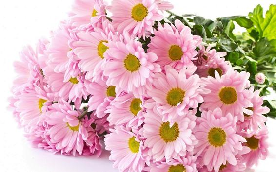 Wallpaper Pink chrysanthemum, bouquet, white background