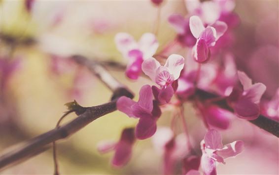 Wallpaper Pink flowers, twigs, hazy