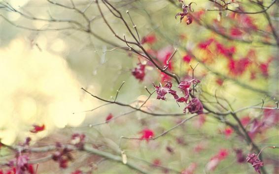 Fondos de pantalla Hojas rojas, ramitas, niebla, otoño