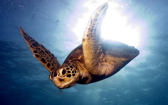 Обои Море, подводный, черепаха, плавание, блики фона