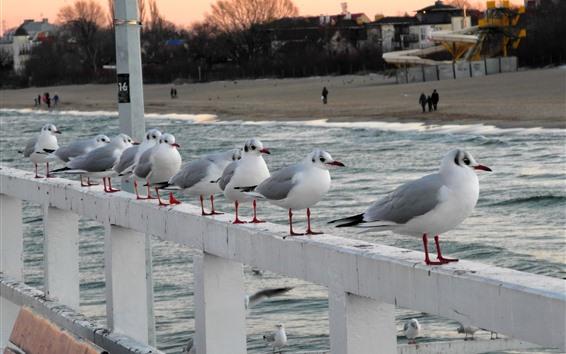 Обои Чайки, забор, море, пляж