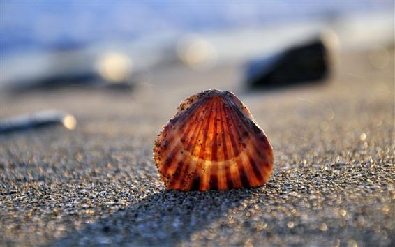 Wallpaper Seashell, beach, hazy