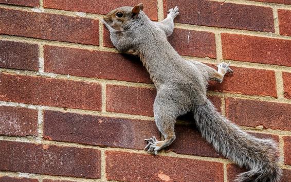 Wallpaper Squirrel climbing wall