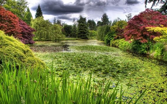 Papéis de Parede Pântano, plantas, grama, árvores, verde, lagoa
