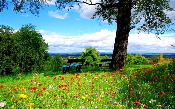 배경 화면 나무, 푸른 잔디, 많은 꽃, 벤치, 봄