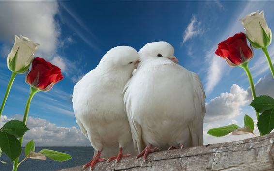 Обои Два белых голубя, пара, тюльпаны, голубое небо