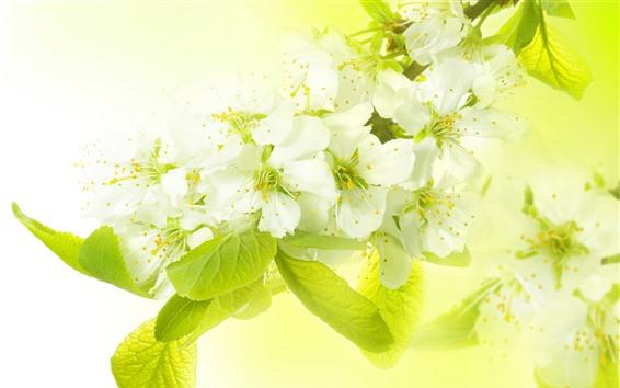 배경 화면 하얀 사과 꽃, 녹색 잎, 헷갈리는 배경