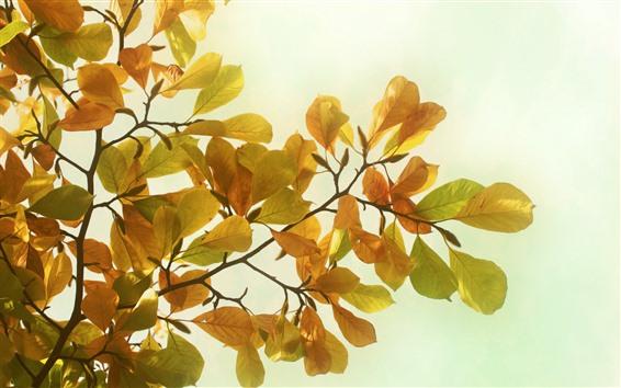 壁紙 黄色の葉、小枝、まぶしさ、かすみ