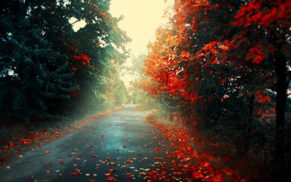Wallpaper Autumn, road, maple leaves, fog