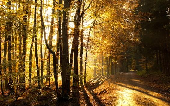 Fond d'écran Automne, rayons de soleil, lumière, chemin, arbres