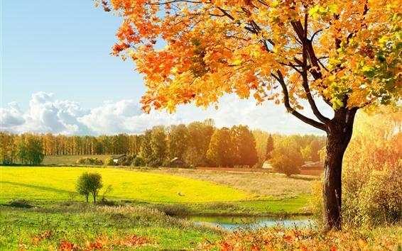 壁紙 美しい秋、黄色のカエデの葉、木、川、田舎